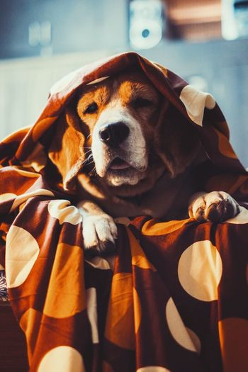 Channelling his inner Sith Lord! EyeEm Best Shots EyeEm Selects EyeEmNewHere Dog Pets Canine Domestic Mammal One Animal Animal Themes A New Beginning