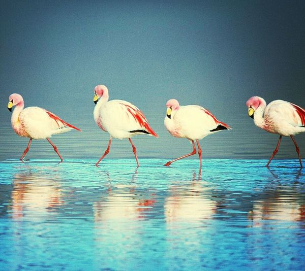 I stole this EyeEm Nature Lover Nature_collection Birds Birds Of EyeEm