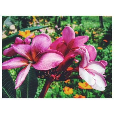 | Da série: Flores | VSCO Vscocam Instashape