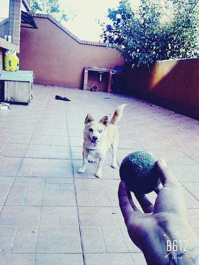 quiere jugar!!! 🔥🔥🔥 I Love My Dog Playing With The Animals