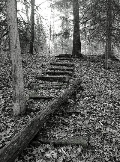 Stairs To Nowhere Surprised In The Woods Forgotten Things Overgrown