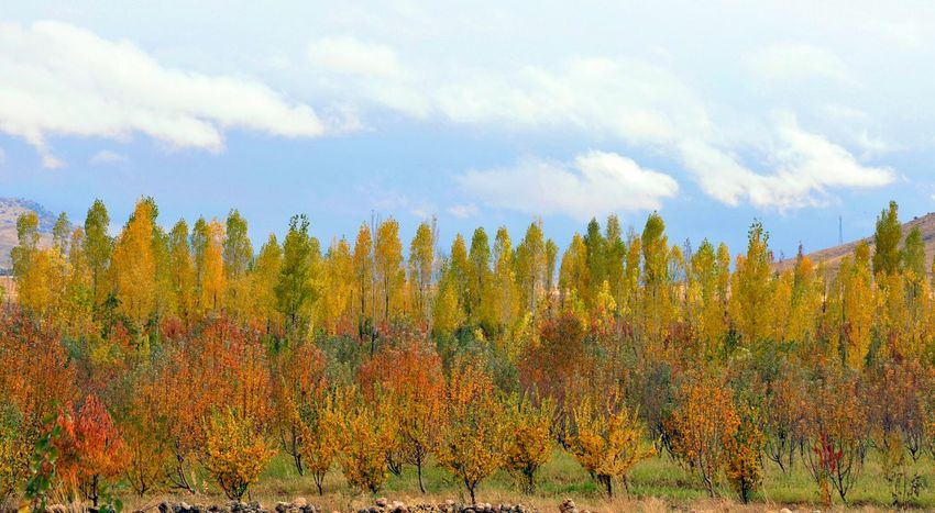 Eyeem Natur Lover Beutiful Sky  EyeEm Gallery Eyeem Nature Beutiful Nature Iran Nature Tree TreePorn Clouds And Sky Tree And Clouds Cloudy Landscape Nopeople Autumn🍁🍁🍁 Autumn Colors Iran♥ Outdoors Tree_collection