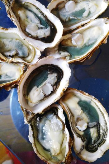 Fine de Claire - navicule bleue - oysters Green First Eyeem Photo Beauty In Nature Nature Blue Fine De Claire Oleron Navicule Navicule Bleue Seafood Table Close-up Oyster  Seashell Shell