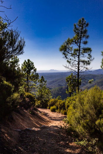Beauty In Nature Day Direction Dirt Dirt Road Environment Growth Land Landscape Mountain Nature No People Non-urban Scene Outdoors Pine Tree Plant Road Scenics - Nature Semi-arid Sky Tranquil Scene Tranquility Tree