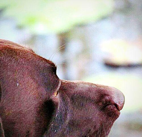 Macro Beauty Ocheesee Pond Florida Life Dogslife Dogsofeyeem Birddog German Shorthaired Pointer The Great Outdoors - 2015 EyeEm Awards