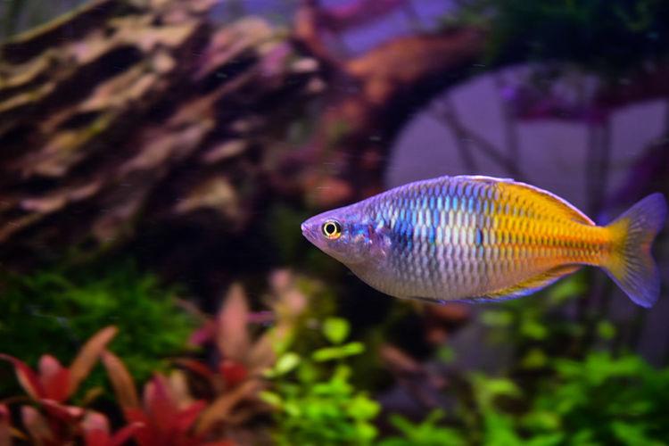 Fish Animal Sea