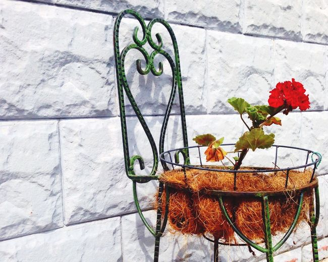 Flowers Summer Backyard Home Home Sweet Home The Week On EyeEm The Week Of Eyeem Flower Beautiful Relaxing