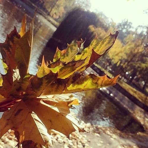 Autumn Goldpolishautumn Perfect Poznań Passion Park Nature Sun Sunny EwaJoannaMatczyńskaPhotography