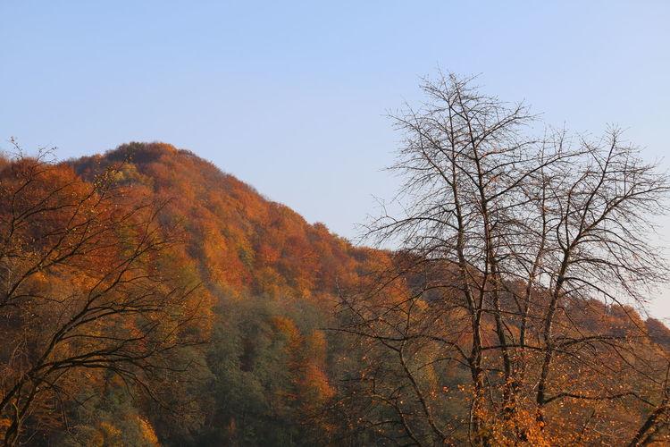 Tree Sky Autumn