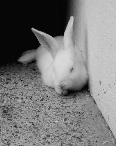Pets Animal Rabbit One Animal Rabbit 🐇 Rabbit Portrait Rabbit