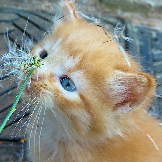 kitty making