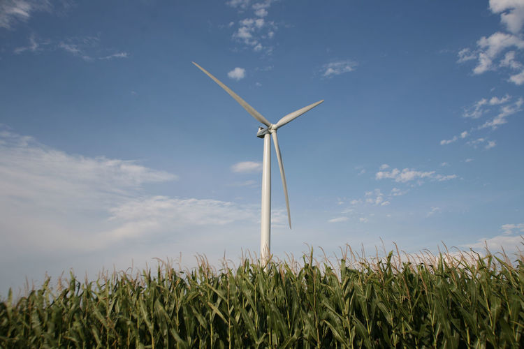 A wind turbine sits in a corn field in Champaign County, Illinois. Agriculture Alternative Energy Corn Corn Field Environmental Conservation Farm Field Fuel And Power Generation Growth Landscape Nature Plant Renewable Energy Rural Scene Technology Tranquility Wind Power Wind Turbine Windmill