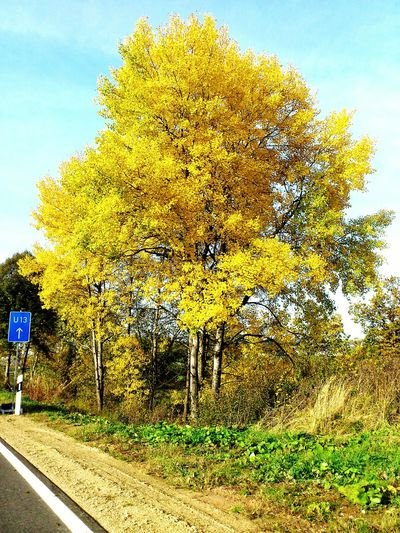 Yellow Tree No People Day Nature Outdoors Sky Green Grass Made By Noesie Yellow Color Herbst🍁 Beauty In Nature Road Landscape EyeEmNewHere The Week On EyeEm