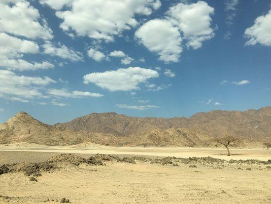 Desert Sky Tree Marsa Alam Aswan Egypt