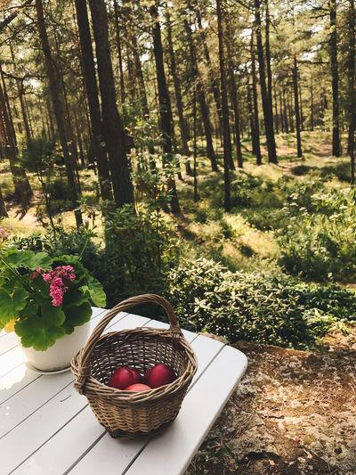 View of flowering plant in basket