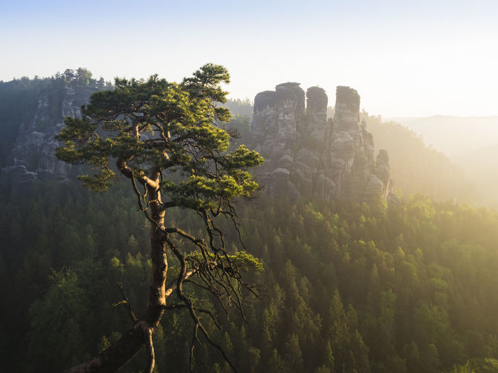 Hiking Sächsischen Schweiz Bastei Beauty In Nature Blue Sky Landscape Mountain Nationalpark Nature No People Non-urban Scene Outdoors Rocks Sandstone Rock Formation Sandstone Rocks Saxon Switzerland Saxony Scenics - Nature Sky Sunlight Sunrise Tranquil Scene Travel Destinations Tree Turism