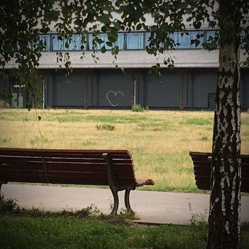 Empty bench in lawn