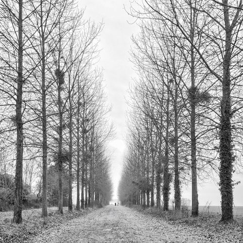 Janvry ´s Castle Alley 😀 Suburb of Paris France IleDeFrance Tree Nature Tranquility Treelined Cold Temperature Snapseed Bnw Iphonephotooftheday IPhoneography Outofthephone EyeEm IPhoneography EyeEm Iphoneonly Iphonographie Iphonephotography Mobilephotography Photooftheday