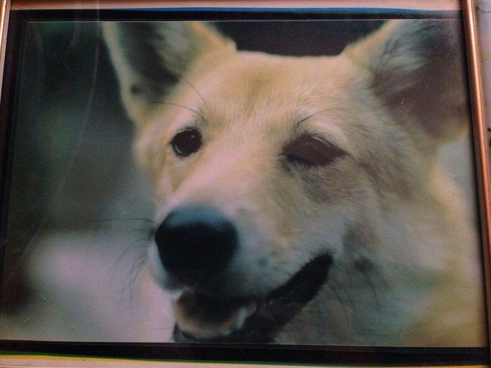 Pets Corner My Father's Photo ピントは目 Film Pentax Sp F 自分で撮ったけど親父の写真だからイイねしないで^_^; Sundayshooter 天まで届け EyeEm Best Edits Flying High Snapshots Of Life Photographic Memory