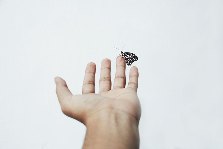 Cropped image of hand holding over white background