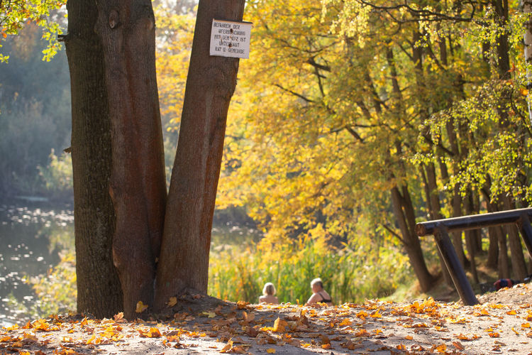 Sunbathing Nature Leaf Animal Swimming Leaves Tree Autumn Day Outdoors Forest Sunbath Change Park Bench Plant Land Tree Trunk Communication Trunk Mammal No People Animal Themes One Animal Focus On Foreground Plant Part Park Vertebrate Autumn Mood