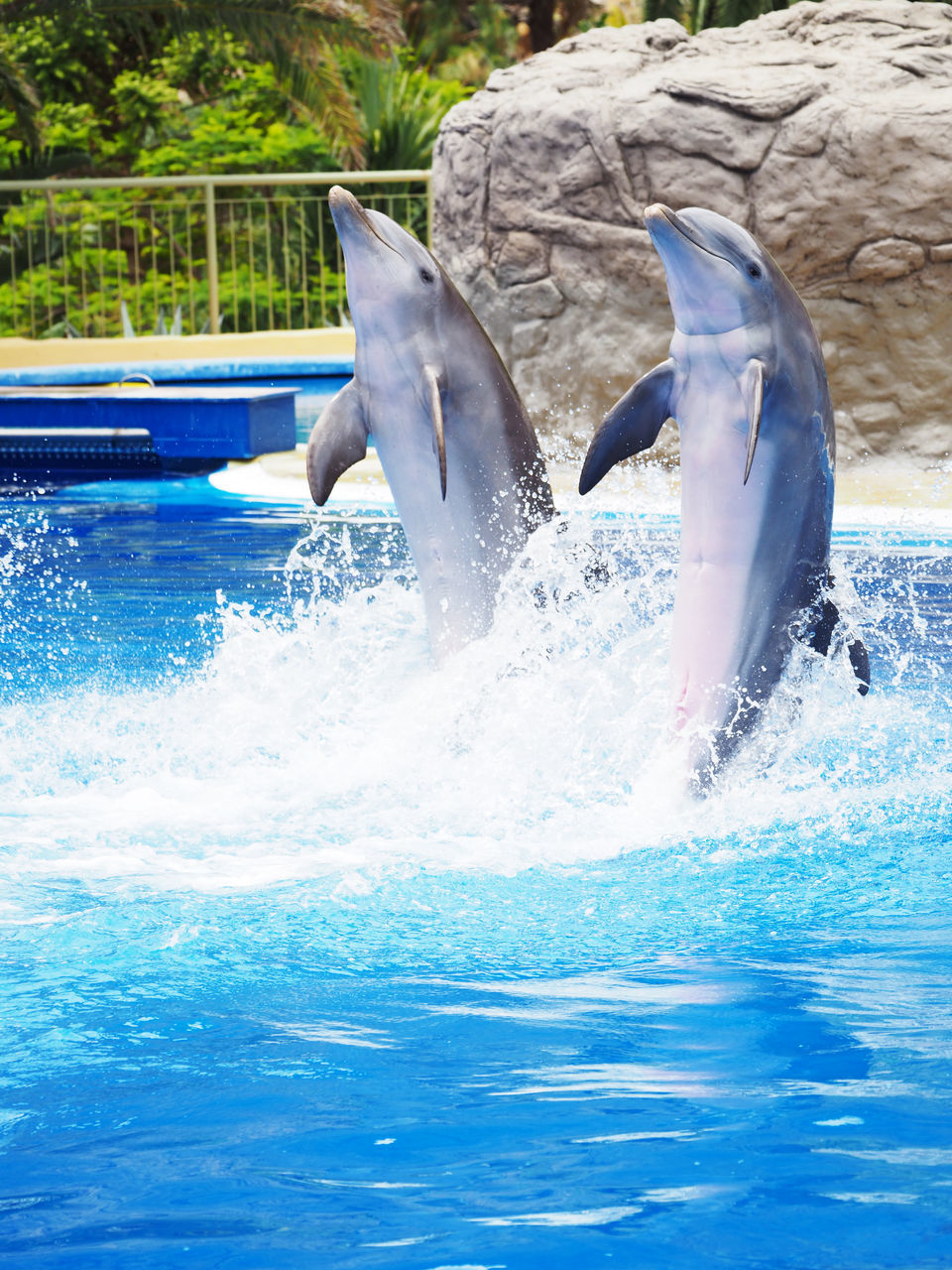 splashing, water, animal themes, jumping, mid-air, day, animals in the wild, motion, one animal, dolphin, animal wildlife, swimming pool, mammal, outdoors, swimming, no people, nature, sea life