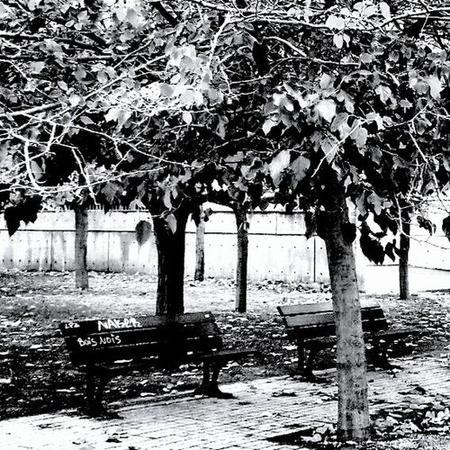 Blacknwhite Eyemphotography Blackandwhite Photography Igblacknwhite EyeEmBestPics Blackandwhitephotography Eye4photography  Amazing_captures Nature_collection EyeEm Nature Lover Naturelovers Arboles Hojas De Otoño