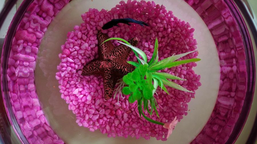 TakeoverContrast First FishMy Doughter🐠 Colorful Getting Inspired Pink Eye4photography  Mobile Photography N6p IMography Freshness My Perspective Capture The Moment Maximum Closeness Focus Object Millennial Pink Millennial Pink