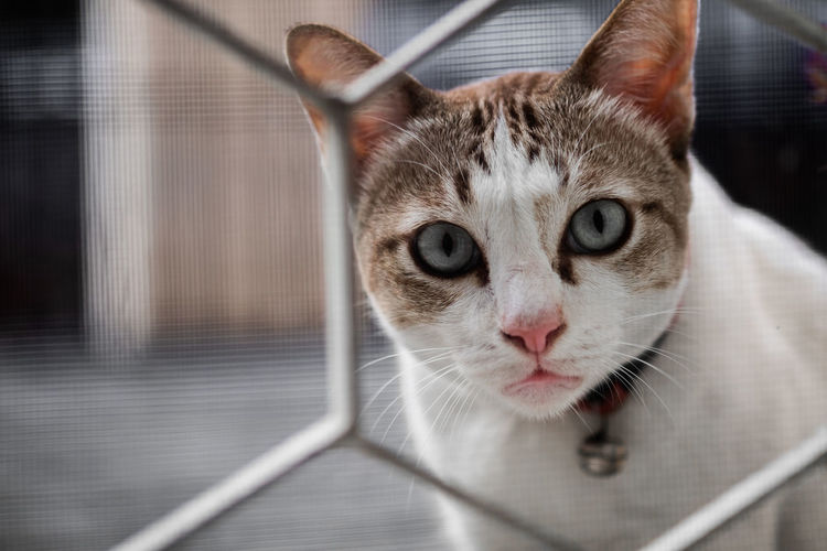 Close-up portrait of cat by camera