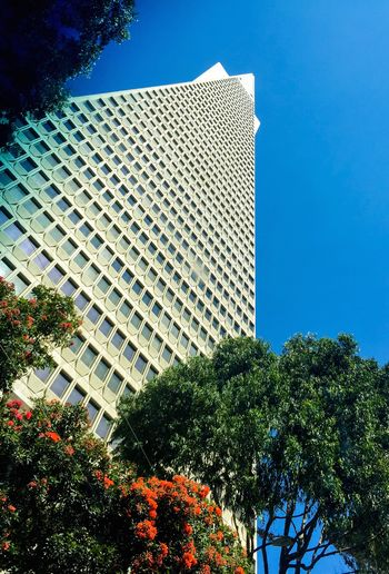 Plant Tree Built Structure Building Exterior Architecture Sky Building Nature Low Angle View No People Day Blue City Growth Outdoors Sunlight Modern Clear Sky Office Building Exterior Flower Skyscraper Luxury TransAmericaBuilding Transamerica Pyramid
