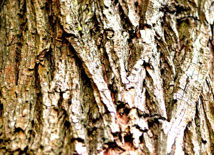 Bark Brown Close-up Detail Full Frame Natural Pattern Outdoors Textured  Tree Tree Trunk