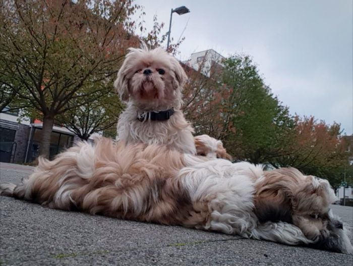 Portrait of a dog relaxing outdoors