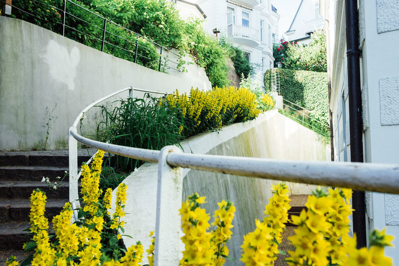 Close-up of yellow flowers on railing