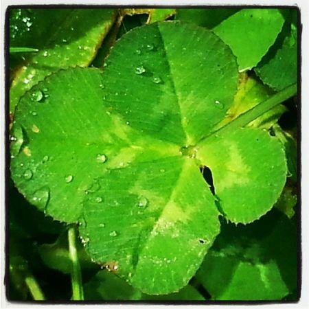 Quadrifoglio Verde Nature