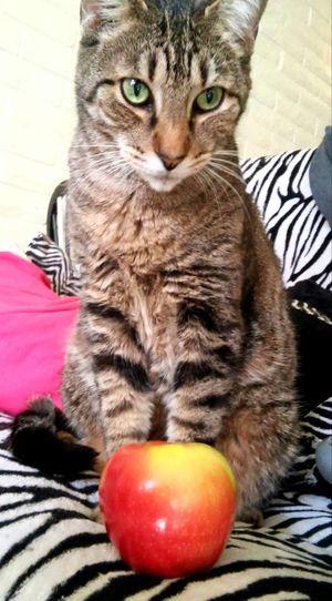 Cats Catlove Kittycat Meow Purrfect Mypal MyBoy Appleaday MyTT