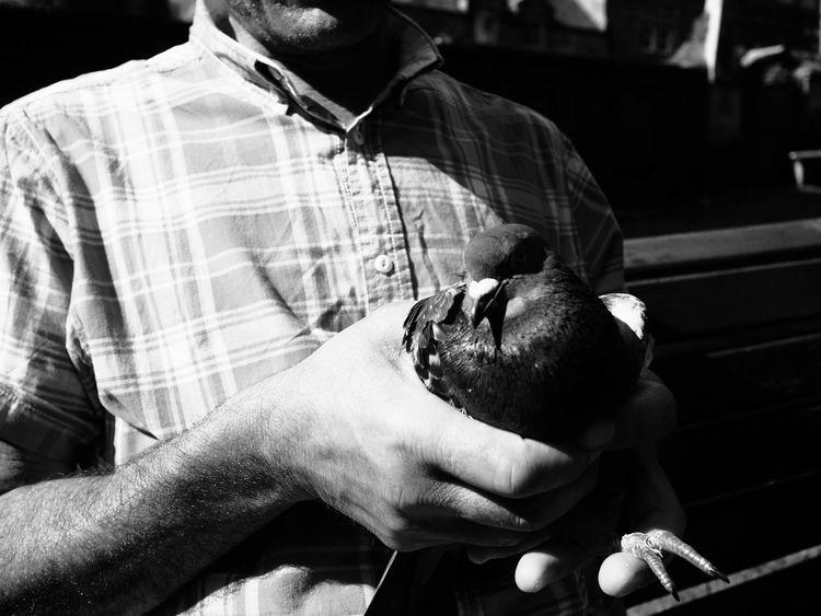 One Man Only Human Hand Human Body Part Close-up Pigeon Bird Injuredbird Good Samaritans