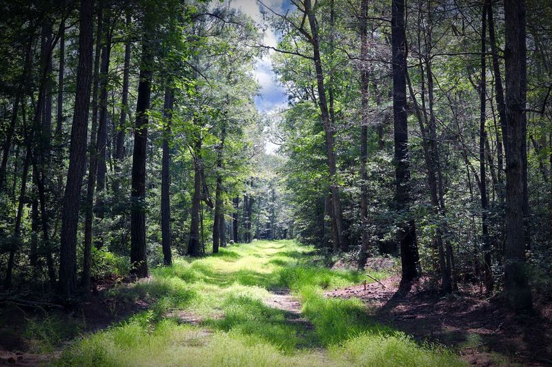 Exposure Life Escaping Backgrounds Earth Landscape Path In Nature Wilderness Travel Destinations Plant Tree Growth Land Forest No People Green Color Non-urban Scene Scenics - Nature WoodLand Lush Foliage Beauty In Nature Outdoors Tranquil Scene Tranquility Nature Day Landscape Environment Foliage