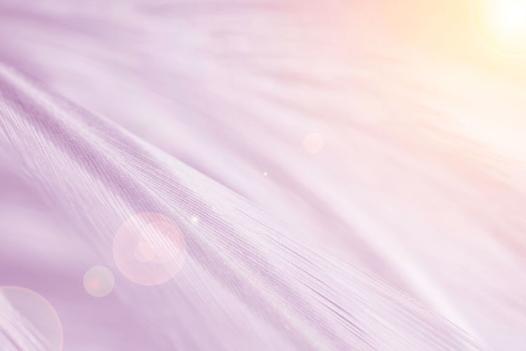 Pink Color Backgrounds Full Frame Close-up Flower Fragility Vulnerability  Plant Beauty In Nature Petal Freshness No People Flowering Plant Extreme Close-up Selective Focus Growth Nature Macro Purple Flower Head Softness Abstract Pollen Abstract Backgrounds Soft Focus