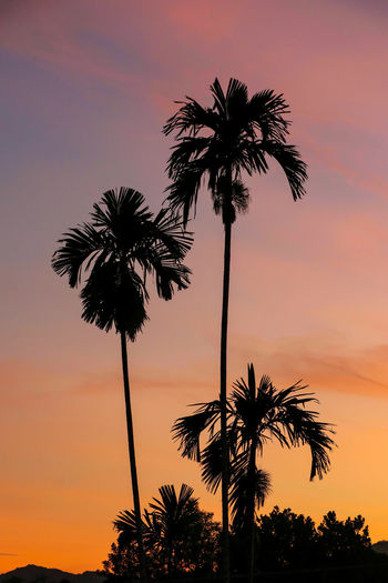 Tree Palm Tree Sunset Coconut Tree Trunk Plant Part Silhouette Cut Out Sky Single Tree Date Palm Tree Tropical Tree Coconut Palm Tree Sky Only Indian Ocean Treetop Dominican Republic Tropical Climate French Polynesia Tahiti Grove Palm Leaf Dramatic Sky Island