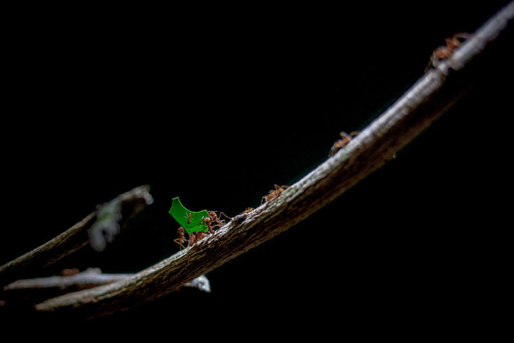 Close-up of insect on twig against black background