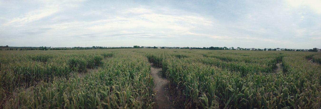 Biggestt Corn Maze in Illinois
