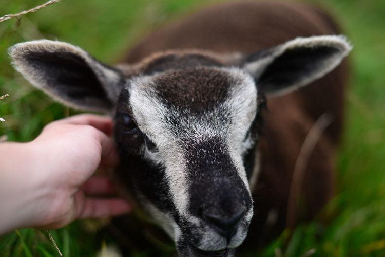 Close-up of hand holding rabbit