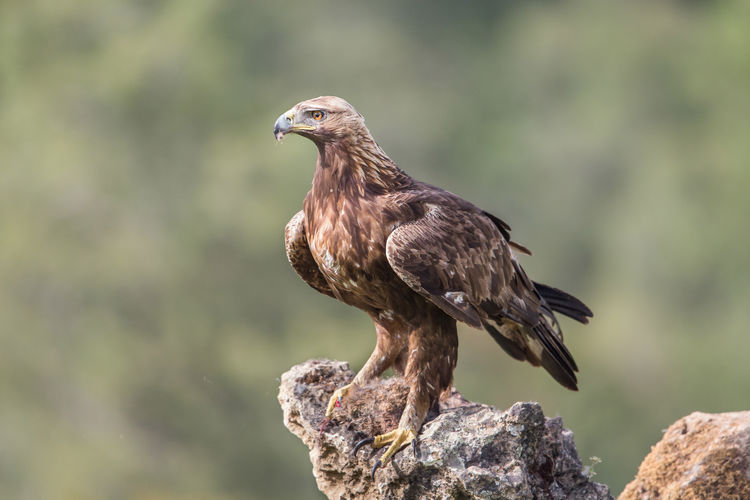 Close-up of bird perching on rock