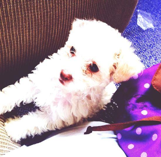 DogLife❤️🐶 it's my baby Pets Perros❤ miperro:3 MyLove ♡ Careful lo amooo;3