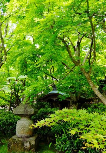 Green Plant Green Color Growth Tree Nature Beauty In Nature Foliage Lush Foliage Leaf Tranquility Plant Part Branch Tranquil Scene Forest Formal Garden Park