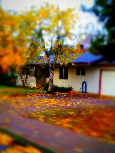 This is the picture that my husband said I did wrong. So I told him to shut up.😉 Built Structure Architecture Building Exterior Outdoors House Nature Illuminated Beauty In Nature Best Of The Best Autumn Halloween Tradition Pumpkin Arts Culture And Entertainment EyeEm Master Class Essence Of Fall Freshness Fall Collection Outdoors Photograpghy  Halloween EyeEm Multi Colored Color Photography Its Halloween! Telling Stories Differtenly The Week On EyeEem