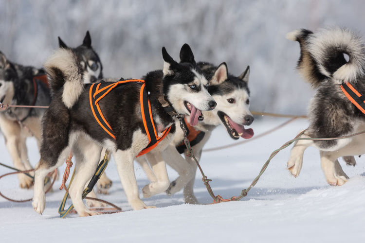 View of dogs on snow covered land