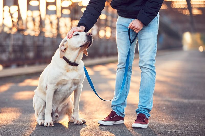 Low Section Of Young Man Petting With Labrador Retriever On Bridge