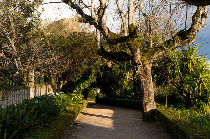 Castle of Abrantes Portugal Beauty In Nature Branch Day Footpath Growth Nature No People Outdoors Scenics The Way Forward Tranquility Tree Walkway