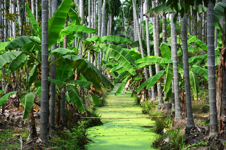 View of bamboo trees in a forest